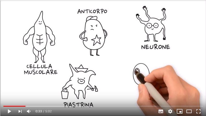 ADOCES – Sai cosa sono le cellule staminali e come si donano